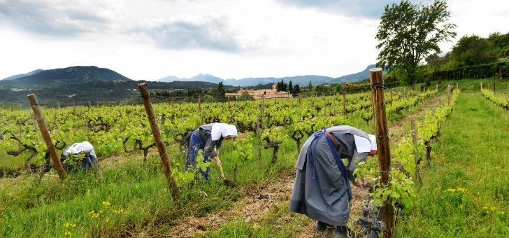 vins-caritas