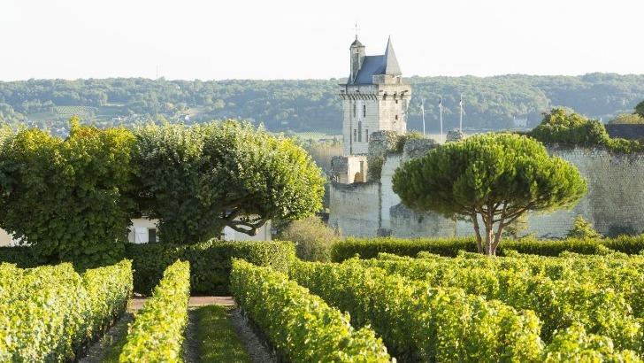 interloire-vignes-et-chateau-de-chinon-credit-stevens-fremont