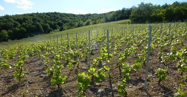 vins-alcools-domaine-domaine-de-la-jobeline-a-verze