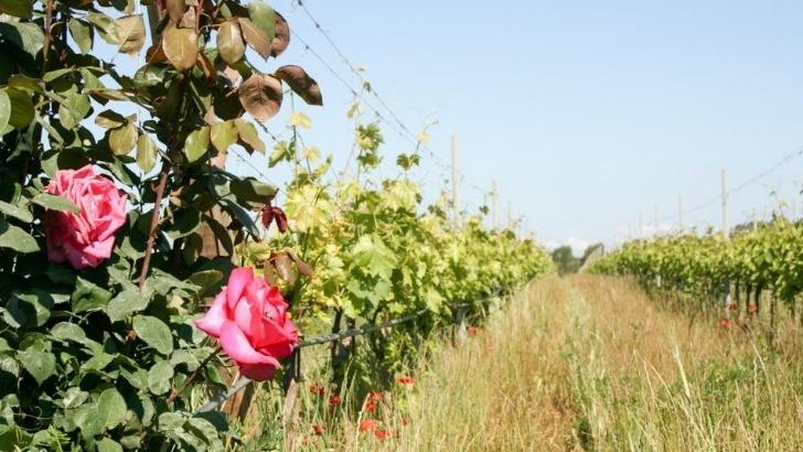 chateau-martinette-un-sol-argilo-calcaire-produit-des-vins-d-exception