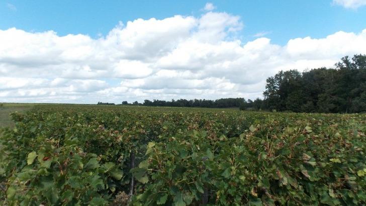 sce-vignobles-jander-une-exploitation-de-17ha-merlots-et-cabernets-regnent-exclusivite