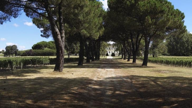 chateau-dauphine-a-fronsac-un-domaine-respectueux-de-environnement-et-des-hommes-une-propriete-au-sein-d-une-nature-foisonnante