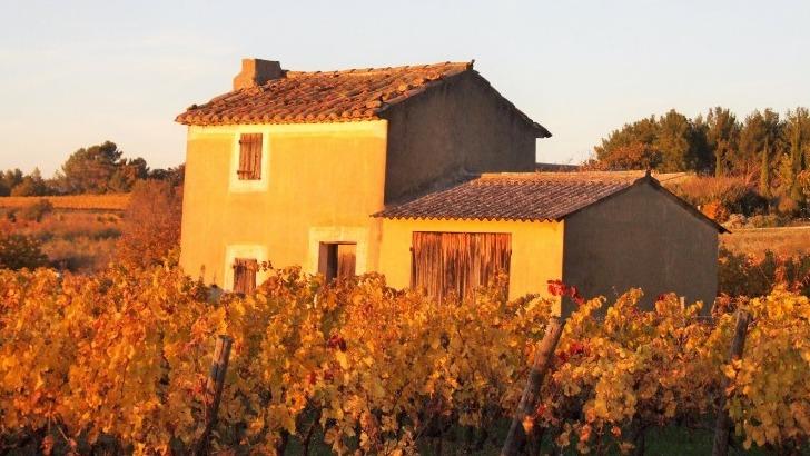 domaine-de-angele-des-sols-propices-a-origine-des-vins-riches-et-races