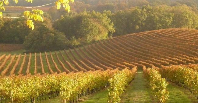 francois-lurton-pardela-wines-a-vayres