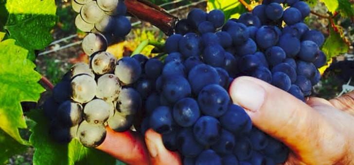 belles-baies-issues-des-vignes-philippe-martin