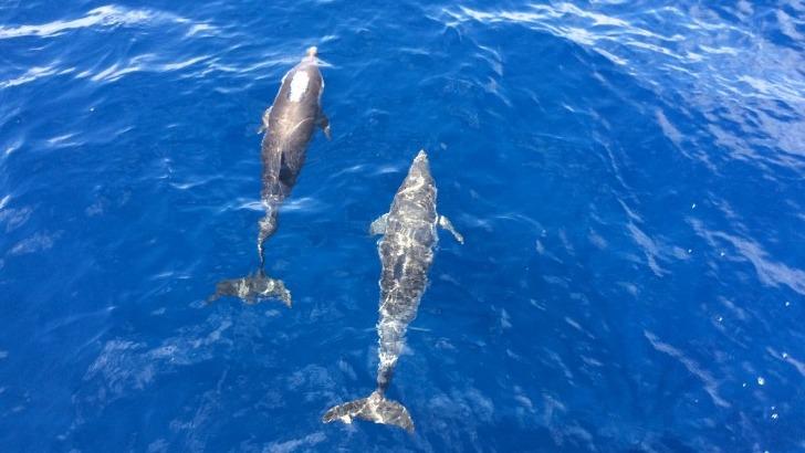 baignade-avec-dauphins