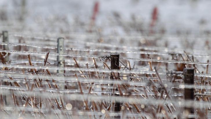 champagne-didier-raimond-a-epernay-une-viticulture-durable-axee-sur-haute-valeur-environnementale