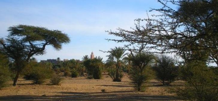 un-trek-entre-deserts-et-oasis