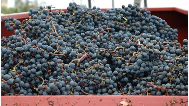 roques-de-cana-raisins-bien-matures-et-gorges-de-soleil-promettent-des-vins-profonds-et-charnus