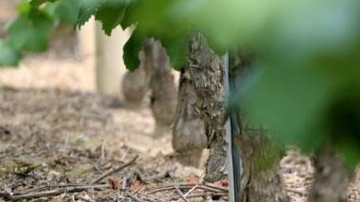 terroir-du-chateau-du-cleray-est-riche-silice-element-rend-vins-tendres-et-aromatises