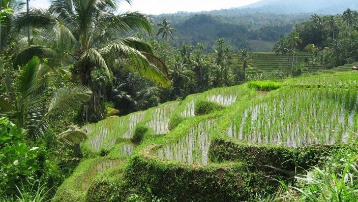 sejours-a-l-etranger-talisman-asia-a-bali-indonesie