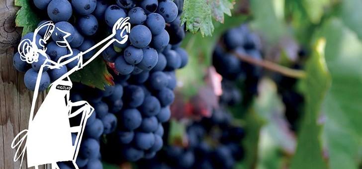 nicolas-region-viticole-emblematique-represente
