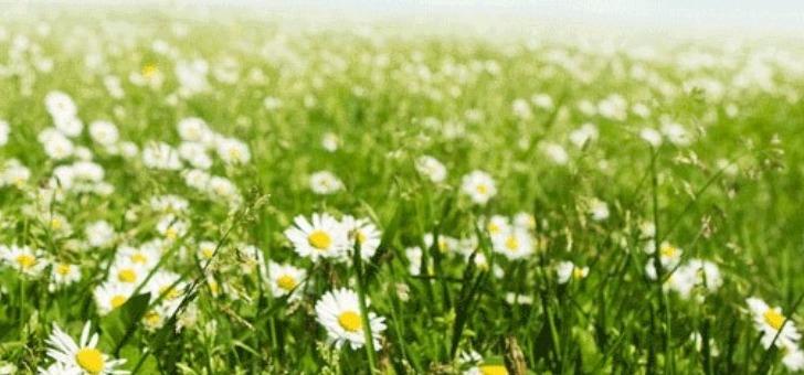 promouvoir-l-exercice-medical-de-l-homeopathie
