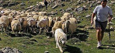 Les fermiers basco bearnais