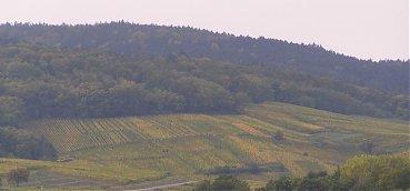 le-vignoble-stempfer-richard-et-fils-s-etend-sur-une-surface-de-8-hectares