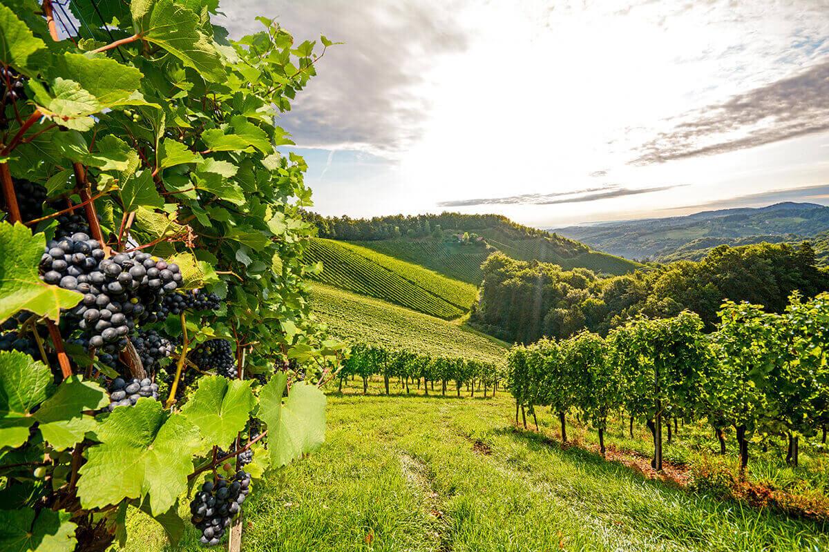 arriere-plan-une-guide-millesimes-vins